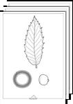Flora1 Colorear