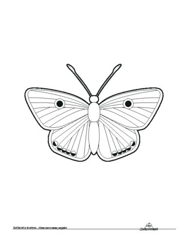Bolboreta Morena. Colorear