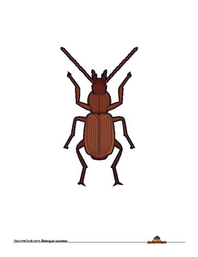 Galaicodytes Caureliensis
