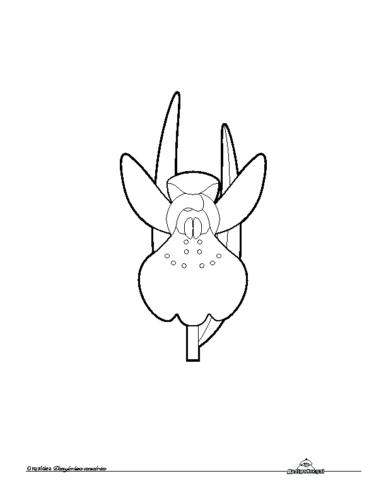 Orquidea. Colorear
